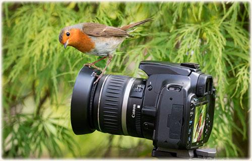 Оборудование для уличной фотосъемки. Необходимые гаджеты!